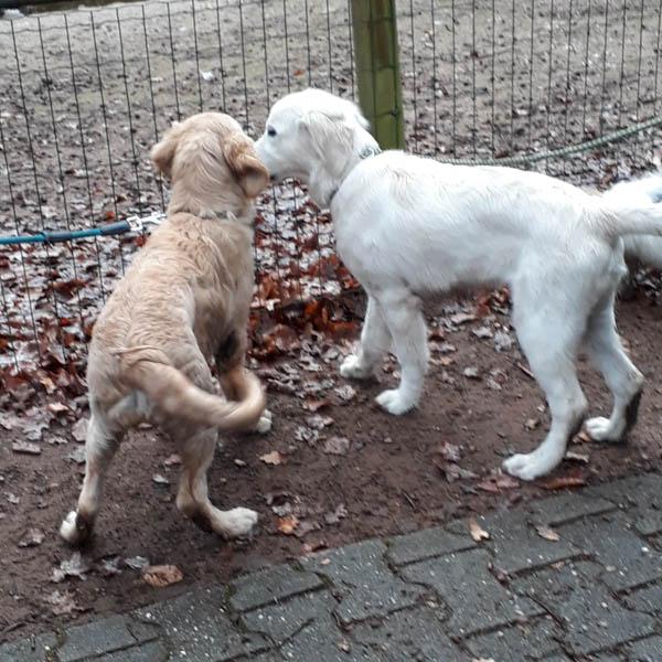 Zoobesuch der Welpengruppe – Dezember 2018