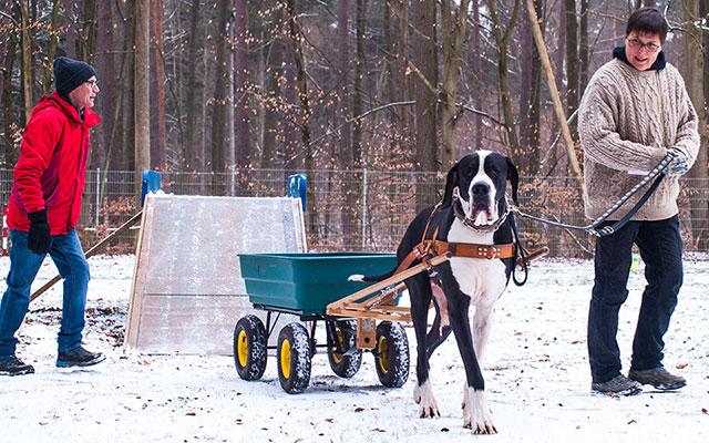 Geschicklichkeitsparcours für Zughunde 2018