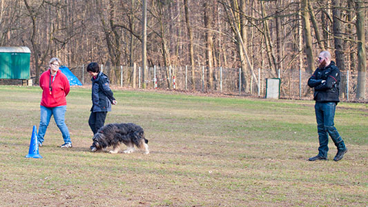Neues Trainingsangebot – Obedience