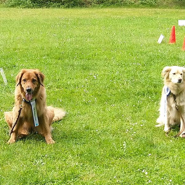 Rally Obedience Turnier beim HSV Kaiserslautern – Mai 2019
