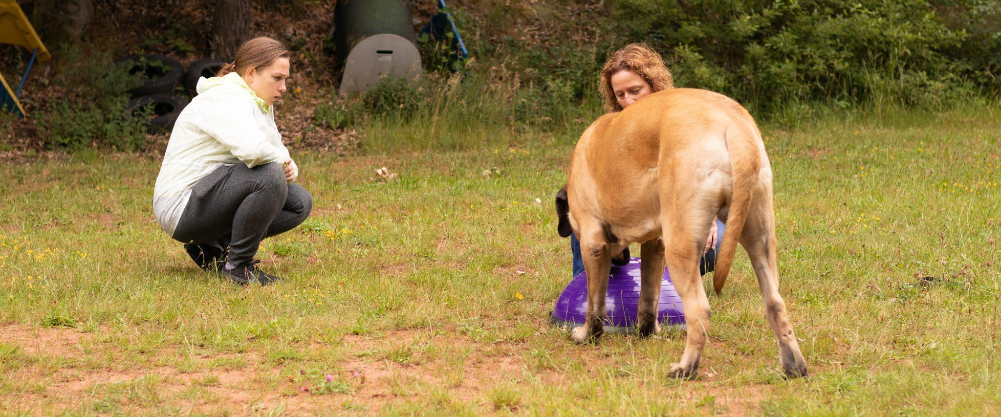 Trainingstherapie für Hundesportler
