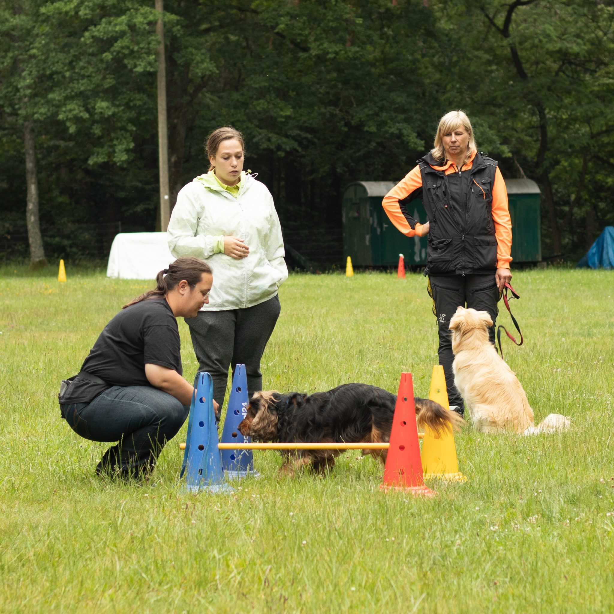 Trainingstherapie für Hundesportler