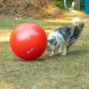 Neues Trainingsangebot – Treibball